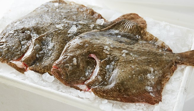 Whole Farmed Turbot