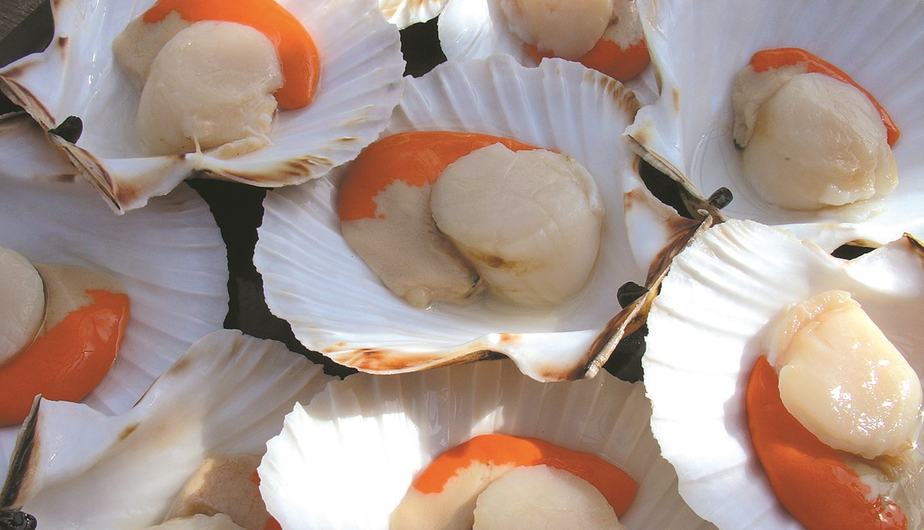 Consider The Scallop