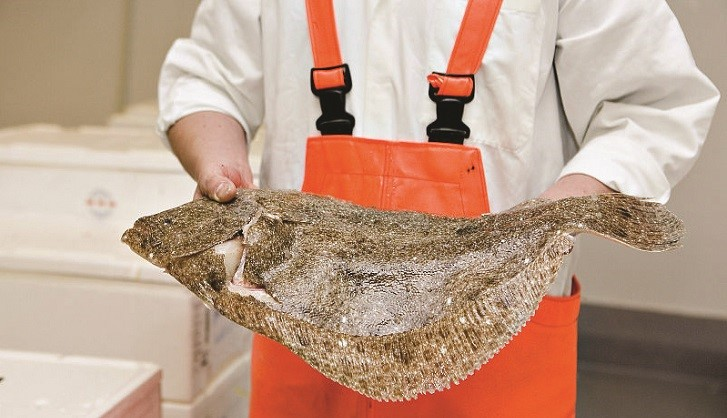 Flatfish: The fresh choice for summer menus