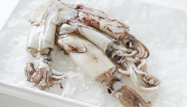 Whole Squid (medium)